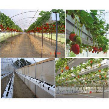 باغچه توت فرنگی2